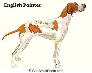 Colored decorative standing portrait of dog Pointer vector illustration