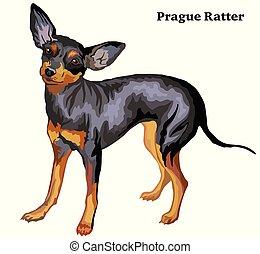 Colored decorative standing portrait of dog Prague Ratter vector illustration