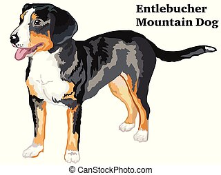 Colored decorative standing portrait of Entlebucher Mountain Dog vector illustration