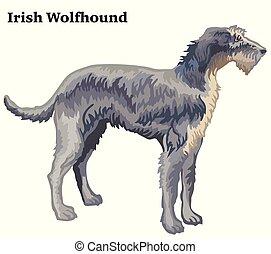 Colored decorative standing portrait of Irish Wolfhound vector illustration