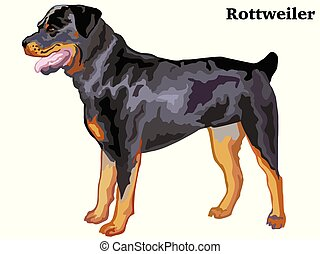 Colored decorative standing portrait of rottweiler vector illustration