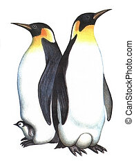 Colored drawing on the paper Birds Emperor Penguin isolated on a white background