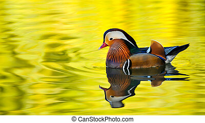 Colored duck floating