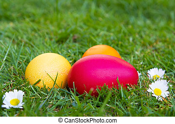 Colored easter eggs on a lawn