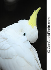 Colored Elegant Parrot Bird