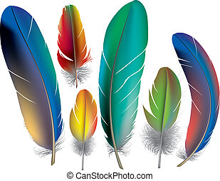 Colored feathers. Contains transparent objects. EPS10