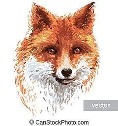 Colored fox illustration on white background - Colored red...