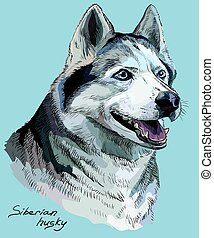 Colored hand drawing vector portrait of siberian husky