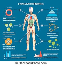Human Body Anatomy Infographic Design - Colored Human Body...