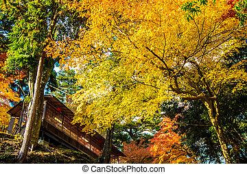 Colored Japanese maple leaf in Jingo-Ji