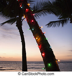 Colored lights on palm tree.