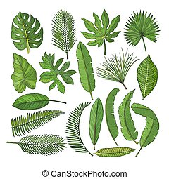 Colored pictures set of tropical leaves. Vector illustrations isolated on white