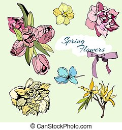 Colored set of spring flowers, tulips and narciss