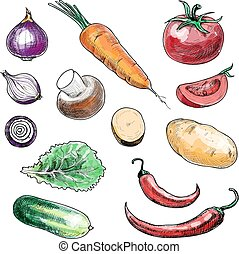 Colored sketch hand drawn vegetables collection