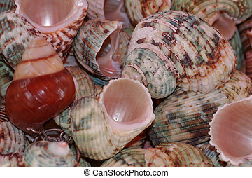Colored snail shells on a market