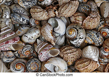 Colored snail shells
