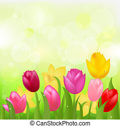 Colored Tulips - Multicolored Tulips And Narcissuses, Vector...