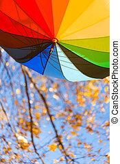colored umbrella in the park