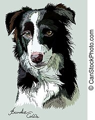 Colored vector Border collie - Border collie vector hand...