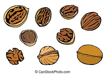 Walnut set, hand drawn - Colored Walnut set, hand drawn...
