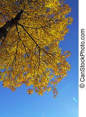 colores, de, otoño