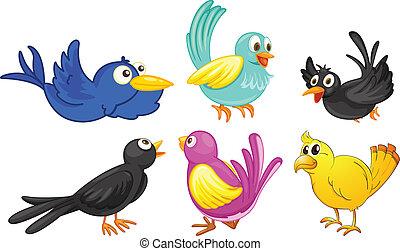 colores, diferente, aves