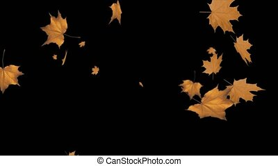 Colorful abstract maple leaves Fall leaves swinging in autumnal background Loop animation. Beautiful nature scene. Eco Friendly, Wedding, Winter, Spring, Green, Summer, Environment, Presentation