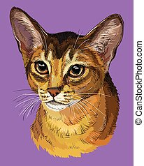 Colorful Abyssinian Cat