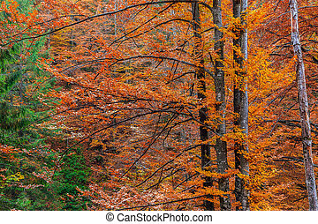 Colorful and bright autumn forest