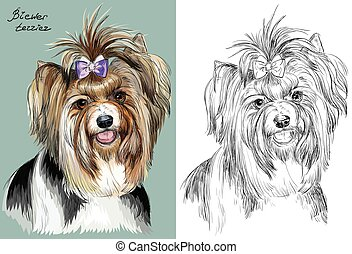 Colorful and monochrome hand drawing vector portrait of Biewer terrier