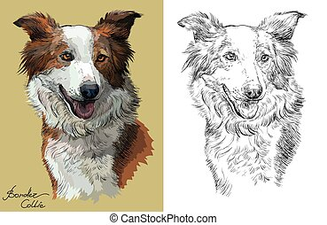 Colorful and monochrome hand drawing vector portrait of Border collie red color