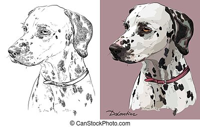 Colored dalmatian dog portrait on pink background and and black color on white background vector hand drawing illustration