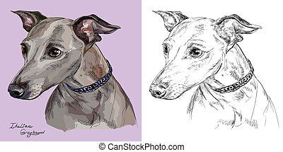Colorful and monochrome hand drawing vector portrait of Italian Greyhound