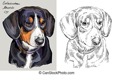 Colorful and monochrome hand drawing vector portrait of Mountain Dog