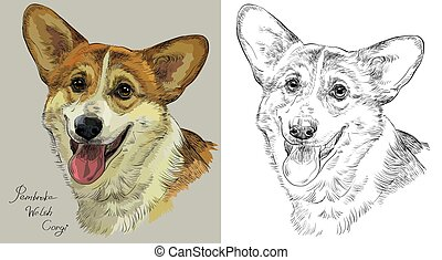 Colorful and monochrome hand drawing vector portrait of Pembroke Welsh Corgi