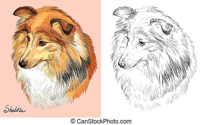 Colorful and monochrome hand drawing vector portrait of Sheltie