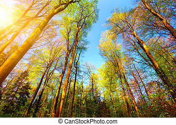 Colorful and sunny forest scenery