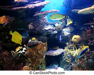 Colorful and vibrant aquarium life