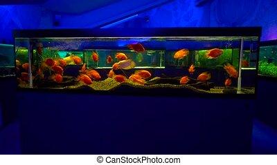 Colorful aquarium at home - Colorful aquarium and a lot of...