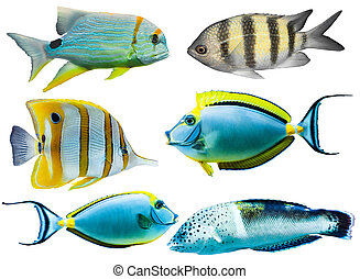 colorful aquarium fish - Collection of different colorful ...
