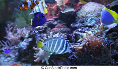 Colorful Aquarium Fish