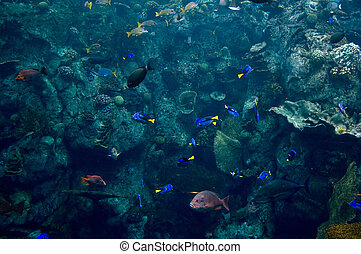 colorful aquarium of the pacific
