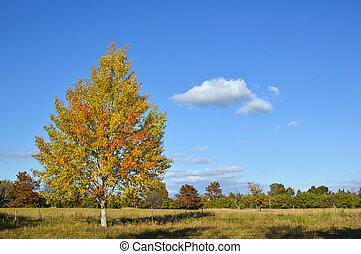 Colorful aspen