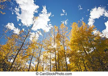 Colorful Aspen Pines Against Deep Blue Sky