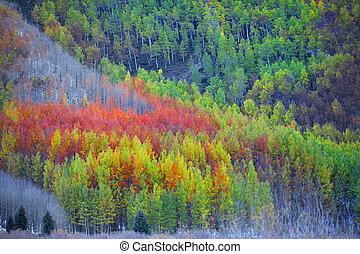 Colorful Aspen trees