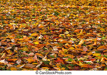 Colorful autumn background.