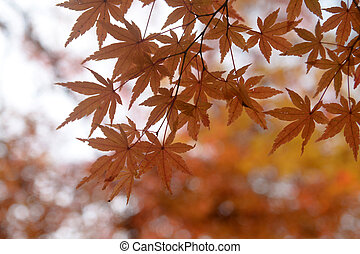 Colorful autumn background with maple leaves