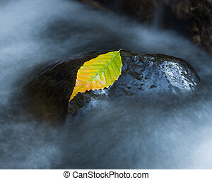 Colorful autumn birch leaf - Long exposure shot of a bright ...
