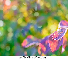Colorful autumn bokeh background