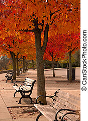 Colorful Autumn Canopy